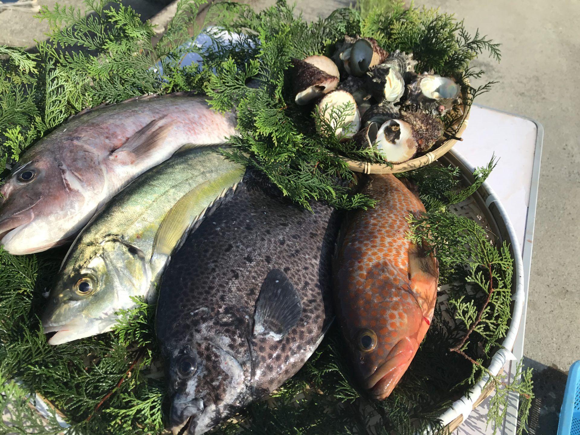 朝とれ鮮魚